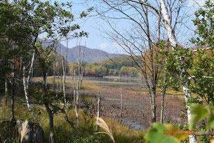 矢の原湿原