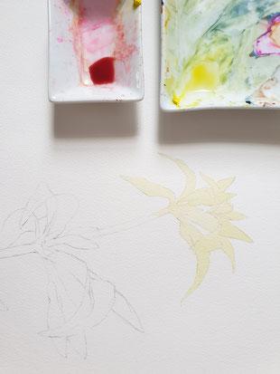 aquarell, malen lernen, botanische aquarelle, fuchsie, watercolor, da vinci nova serie, florale Aquarelle