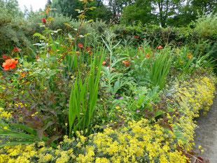 Steinkraut, Gladiolen, Artischocken, Rosen