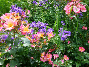 Rosen und Glockenblumen
