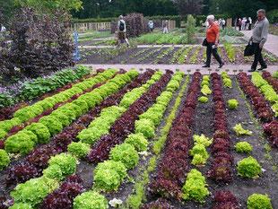 Salat - Muster