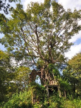 カンボジアの新世界遺産「古代イーシャナプラの考古遺跡、サンボー・プレイ・クック寺院地帯」のプラサート・イェイ・ポアン