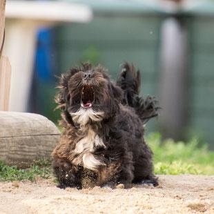 Verhaltenstherapie bei der mobilen Hundeschule Takoda in Göttingen