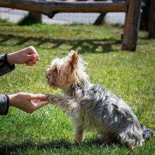 Einzeltraining bei der mobilen Hundeschule Takoda in Göttingen