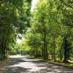 新檜尾台緑道緑の景色