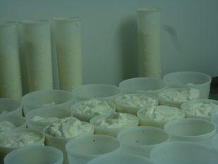 Faisselles bûche et tourom sur la table de moulage pour fromages de chèvre fermiers à la Pérotonnerie de Rom 79120