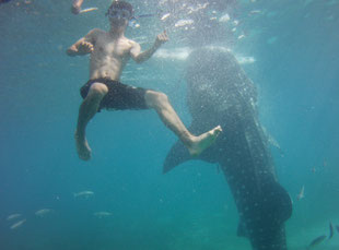 Mao (our student) swimming with a Shark whale