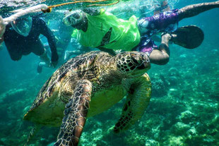 One of our students is excited to see a sea turtle