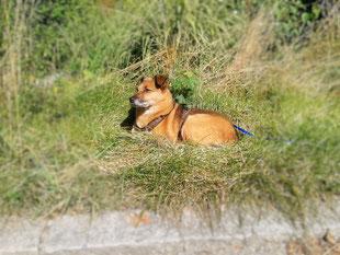 Training mit Hunden aus dem Auslandstierschutz