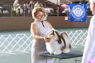 犬種ハバニーズ ドッグショーチャンピオン ハバニーズ専門ブリーダー ブリリアントハバニーズ
