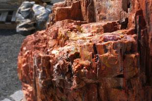 Versteinertes Holz Petrified Wood Garten Naturstein Terra Domo Filderstadt