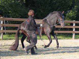 Charlie im Gallopp beim Training mit Clarissa Schallner auf dem Hof Felix