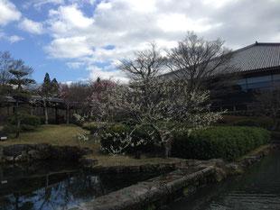 関係ないですが先週末の奈良公園です☆