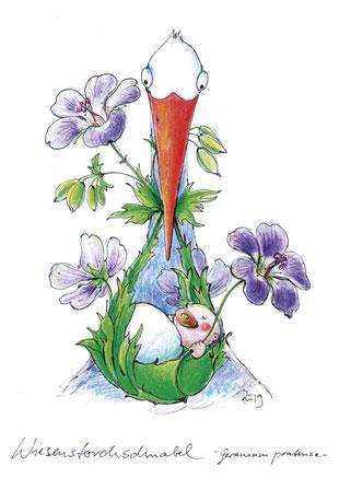 Ein Storch guckt aus dem Bild und hält im Schnabel ein Baby, das in den Wiesenstorchschnabel gebettet schläft. Wortspielerei.