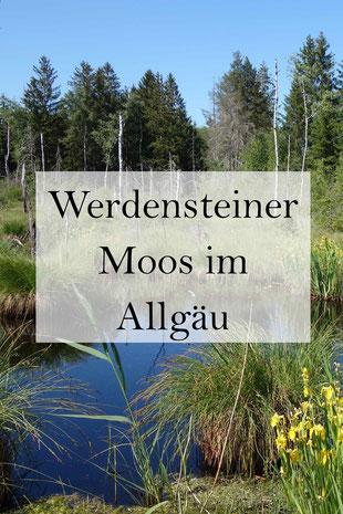 Hochmoor Werdensteiner Moos im Allgäu in Bayern bei Martinszell, Oberstdorf, Kempten