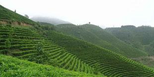 Les jardins de Yaming, Longlin, Guangxi