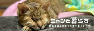 当院の動物看護師が運営する猫情報ブログ