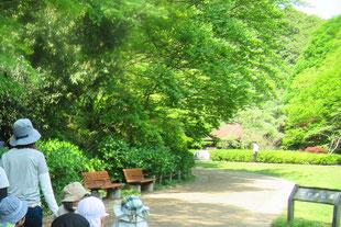 県立 東高根森林公園の中で療育としての歩行訓練が出来ます。