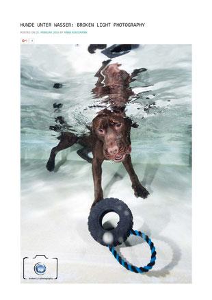 Bild: Artikel über Hunde Fotografie