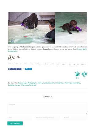 Bild: Artikel über Hunde unter Wasser Fotos