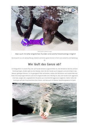 Bild: Blog Artikel über Hunde unter Wasser Fotografie