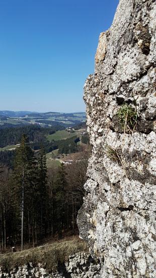 Aussicht von der Burg Ruttenstein