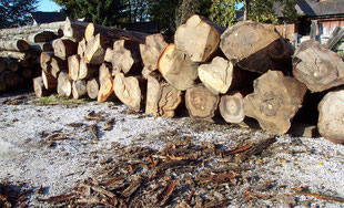 Round logs, Max Cropp Hamburg, Germany