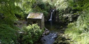 Holzhaus im Wald an Gewässer