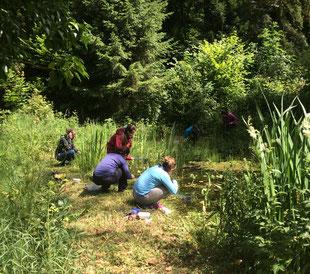 Kursteilnehmende erforschen einen Teich
