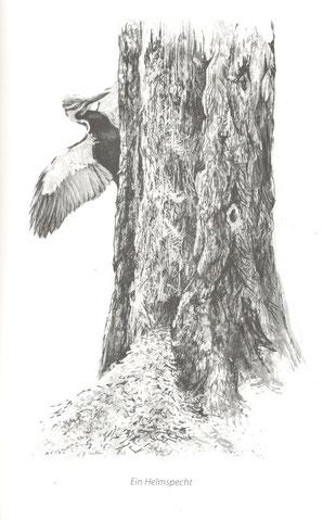 Der Baum. Illustration von Robert Bateman