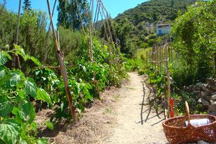 Gemüsegarten auf Terrassen