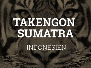 Rohkaffee Sumatra kaufen Schweiz