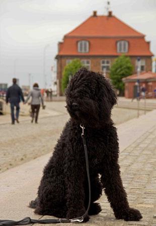Hier sitze ich vor dem Baumhaus im Alten Hafen von Wismar. Es war mal wieder windig.