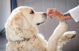 tiergestützte Therapie Therapiehund