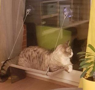 habituer chat hamac
