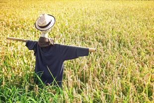 農地転用許可の写真