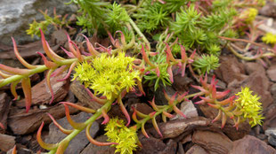 Garten - heiße Sommertage entspannt genießen - Sukkulenten pflanzen - DIY-Projekt