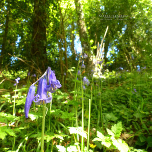 kp Kitsch-paradise artisans créateurs artiste artist créateurfrancais artisanat art nature naturelove foret forest
