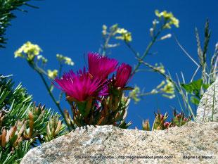 Fleur d'Argenton (29) RLM 2013