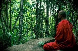 Kultur & Ayurveda in Sri Lanka