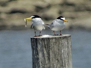 ・2017年5月20日 葛西臨海公園 無視された