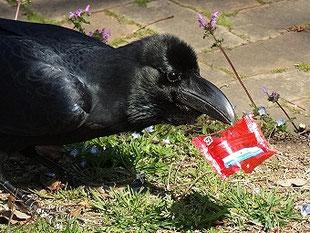 ・2019年3月27日 柏の葉公園  ・落ちていた菓子袋の中からビスケットを取り出して、