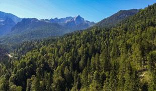 Wald, Landschaft, Berg, Zugspitze, Tannen, Luftbild