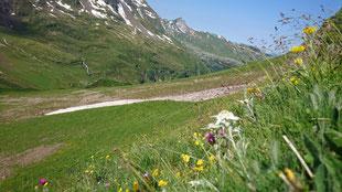 Blick über die Edelweiss in Richtung Schwabhorn (02.07.2019)