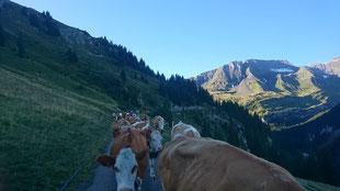 Noch ein letzter Blick zurück.. Die Alpsaison ist für dieses Jahr am Ende (12.09.2019)