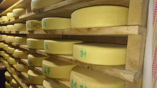 Bereits wurden über 150 Laibe Käse hergestellt (08.07.2019)