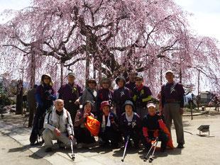 「麻績の舞台桜」をバックに記念撮影。