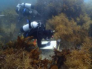 藻場調査の様子