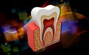 Der Aufbau eines Zahnes
