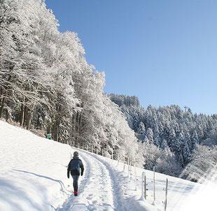 Schneeschuh- und Winterwanderungen in Oberbayern, Tirol, Vorarlberg, Südtirol, Engadin
